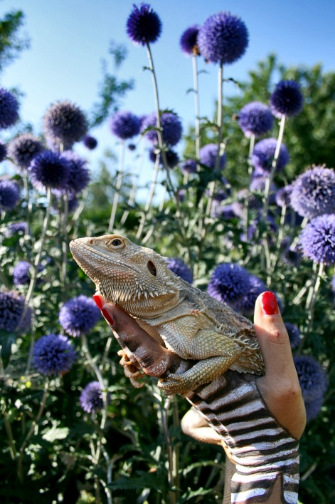 lizard in a blue thistles